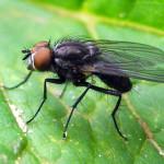 Фото мухи
