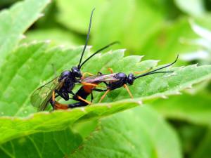Секс насекомых